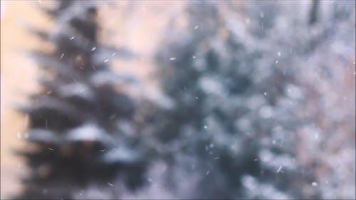 Neve Che Cade