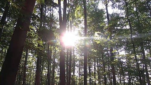 Sun Glaring From Trees