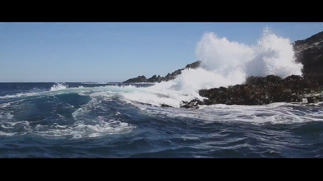 Big Waves Hitting Shore and Sea Lions