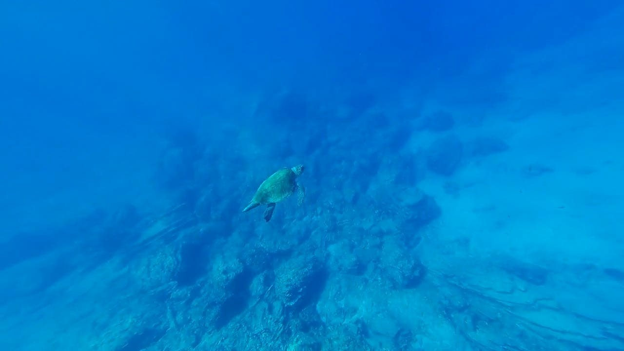 Underwater Video of Sea Turtle