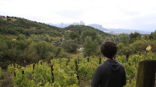 Vineyard Production