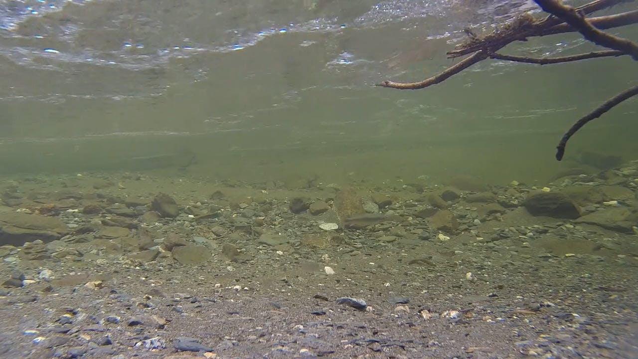Footage Of Underwater Fish