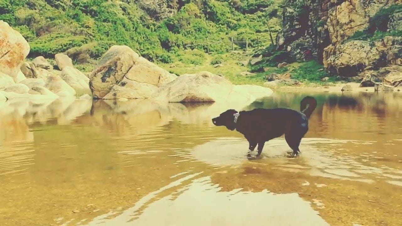 Playful Dog At The Beach