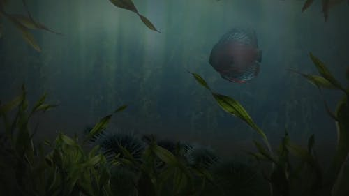 CG Animation Of Fish Swimming Around