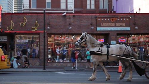 Tourist Riding A Carriage