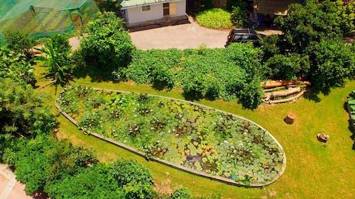 Drone Shot Of Green Garden