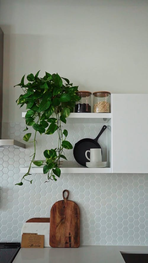 Video of a Kitchen Cabinet With Indoor Plants