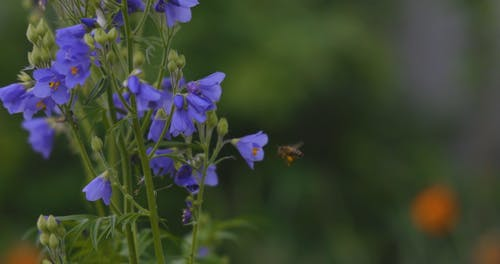 A Close-Up Video of a Bee on a Flower