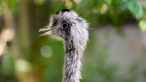 Close-up Footage of an Emu