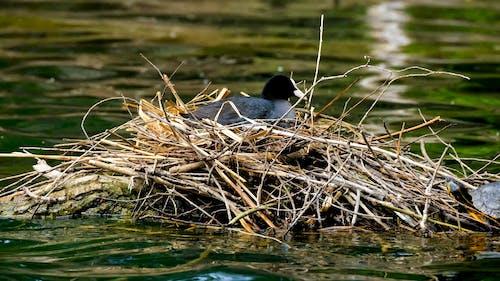 Bird on the Nest