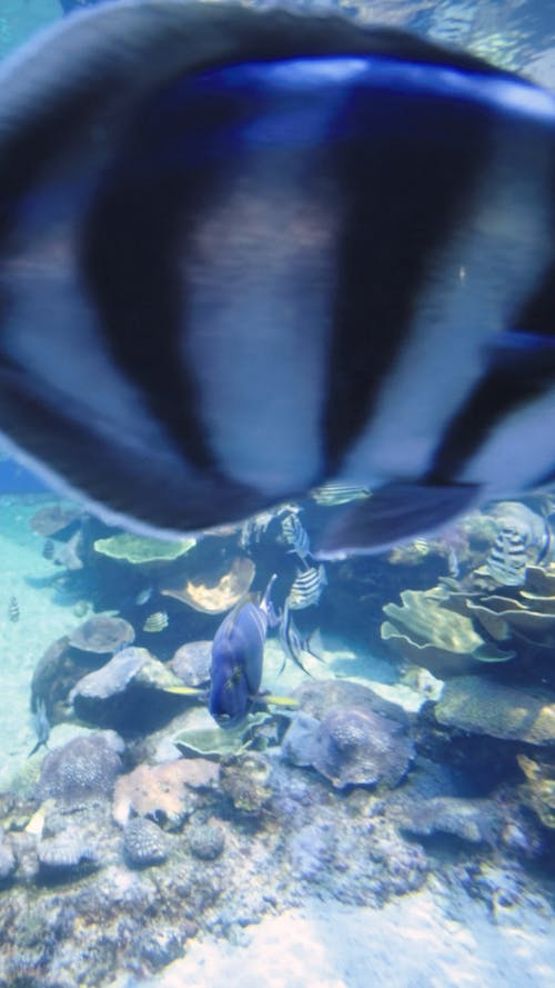 Video of a Fish Underwater