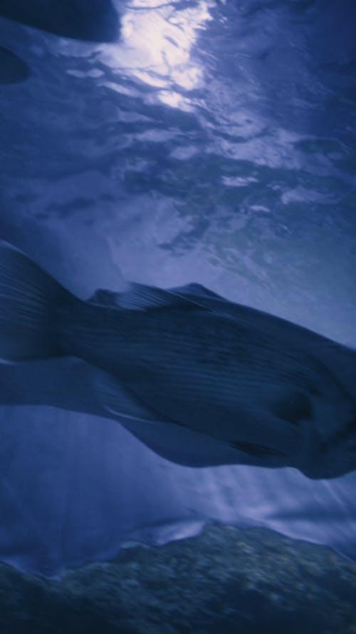 Aquatic Animals Swimming Underwater