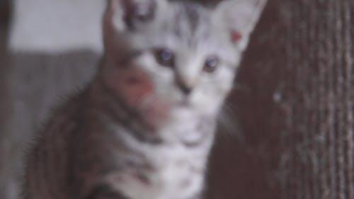 Close Up Video of a Kitten
