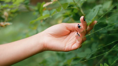 A Person Touching Plants