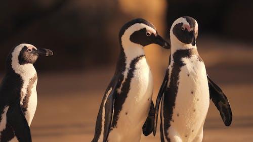 A Cute Penguins on the Beach