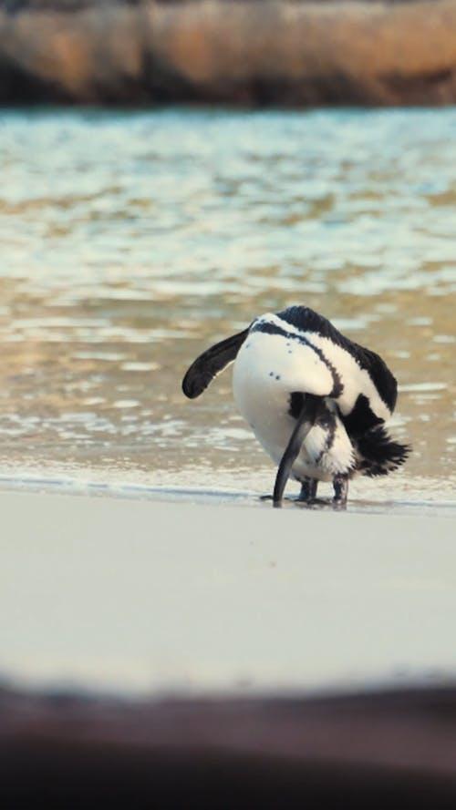 A Penguin on the Beach