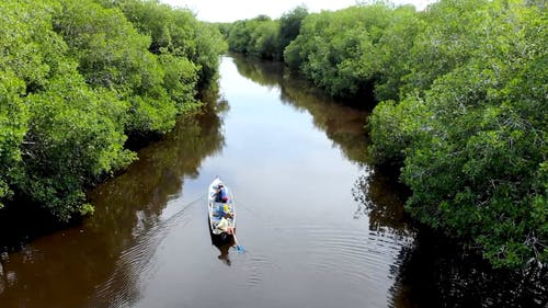 Drone Footage of People Canoeing on a River