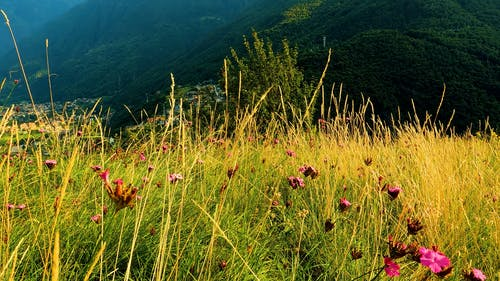 Grass and Flowers Swaying in the Wind
