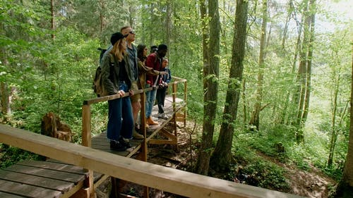 Hikers Enjoying the View of the Forest