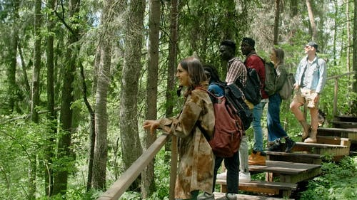 Backpacking Friends Looking at a View in a Forest