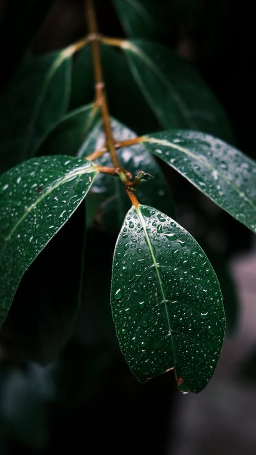 Close-up of droplets on green leaves