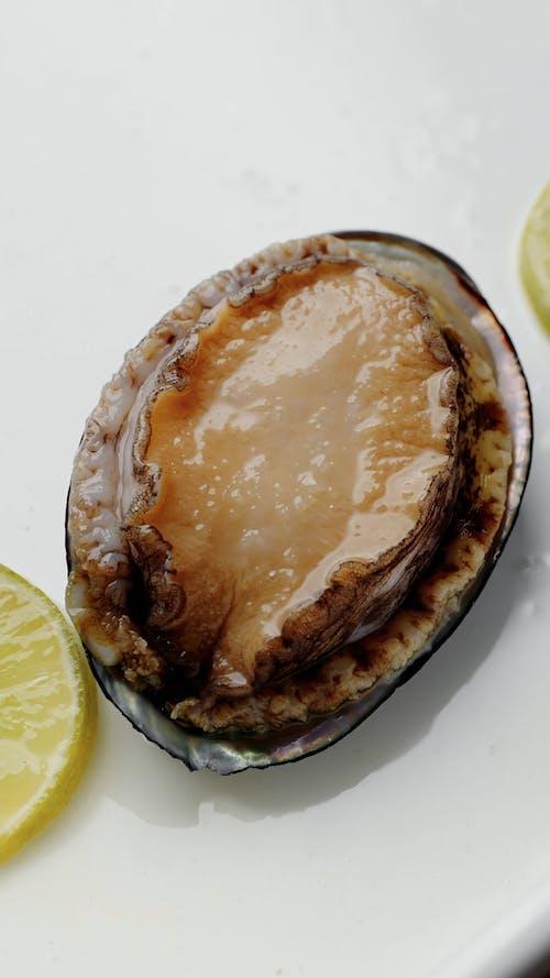 Fresh Live Abalone