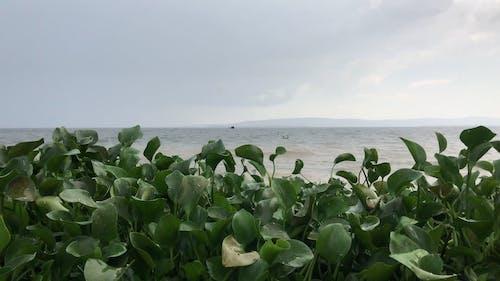 Green Plants During Rain on Seashore