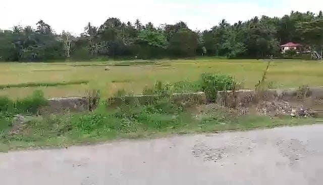 Video Of Farmland