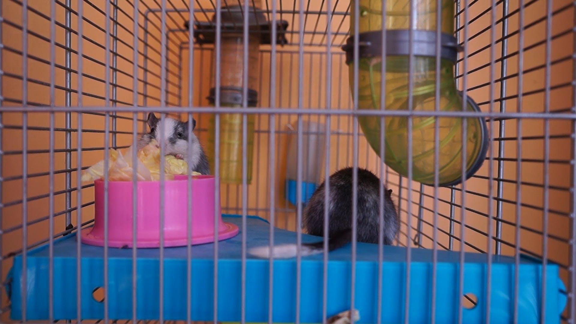 Two Cute Little Hamsters