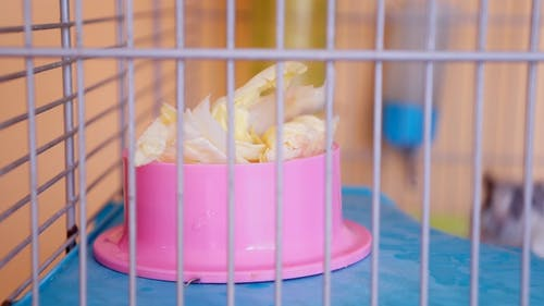 Black And White Cute Little Gerbil Inside A Cage