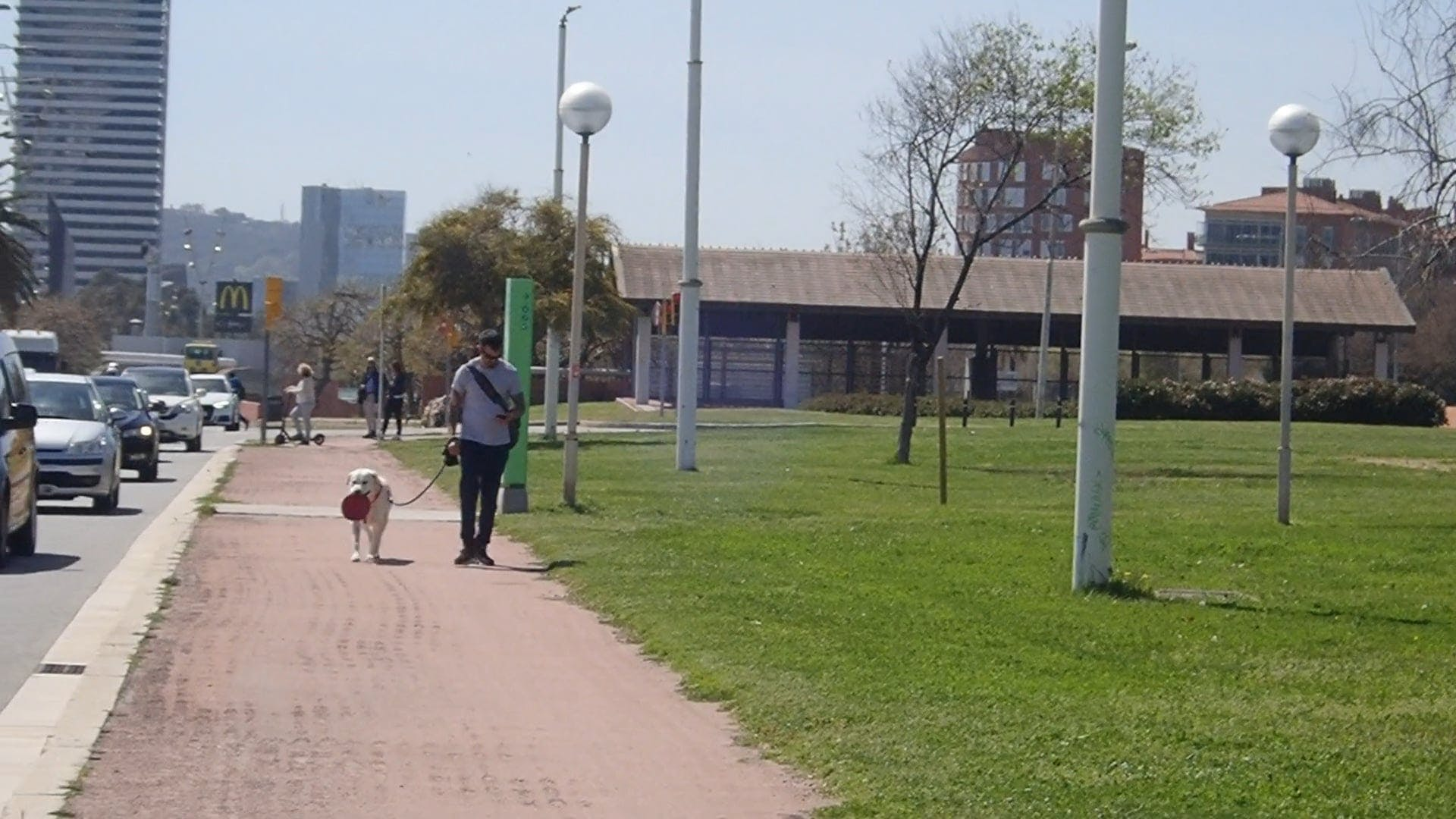 Man Walking The Dog At The Street